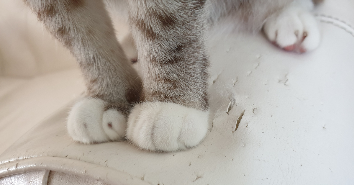 How to Stop Your Cat from Scratching Your Furniture - Does ...